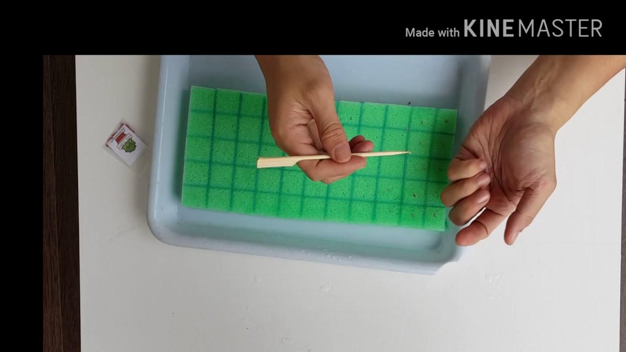 วิธีเพาะเมล็ดผักสลัด ง่ายๆ by Mr.EasyPlants