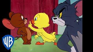 Tom y Jerry en Latino | Lo Mejor del Pequeño Patito | WB Kids