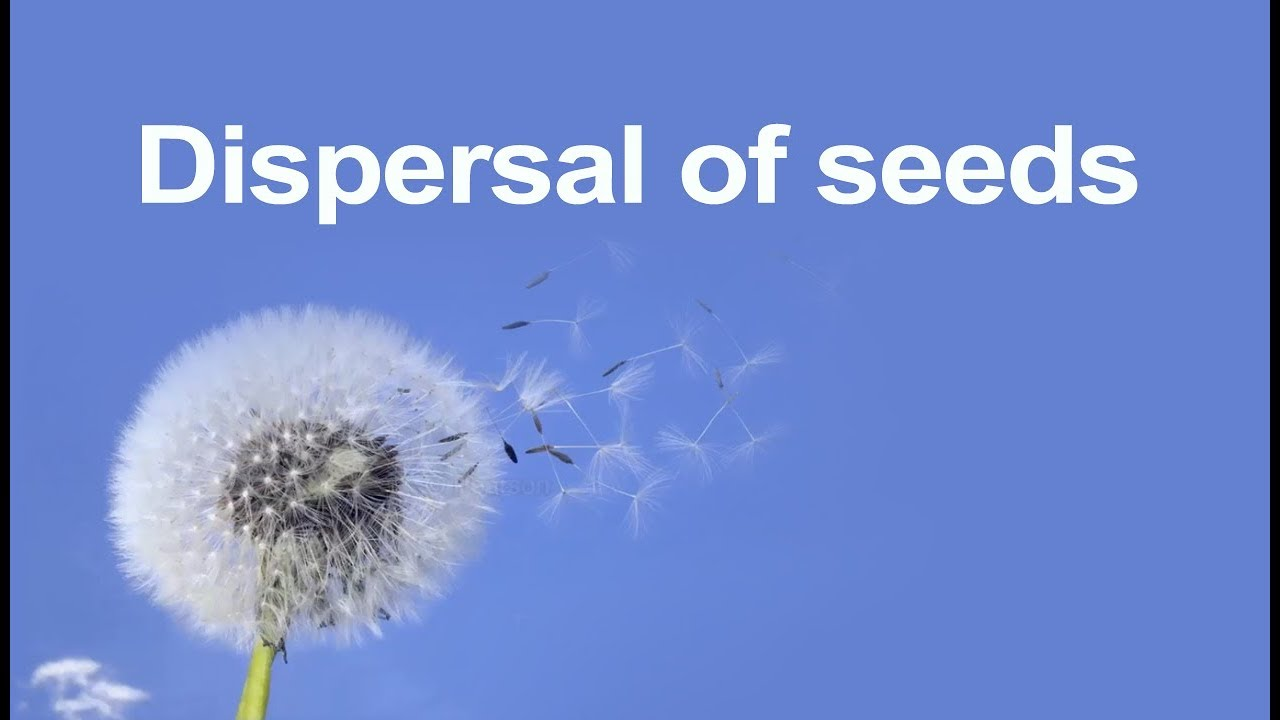 Class 5 Science | Learn Dispersal of Seeds and how plants grow | Pearson