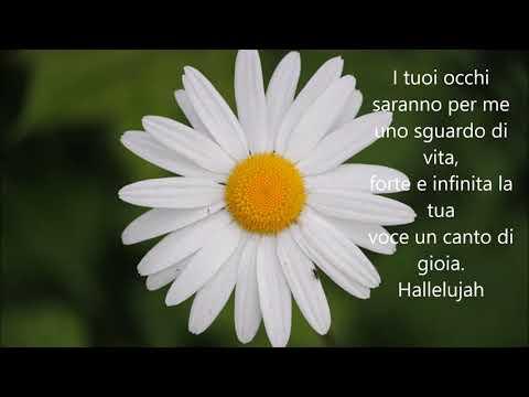 Halleluja Cohen testo italiano per matrimoni (Barbara)