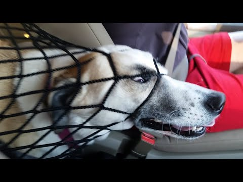NOT THE SMARTEST DOGS - Derpy Dogs - LAUGH Compilation