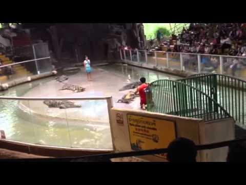 Xiếc cá sấu Thái Lan