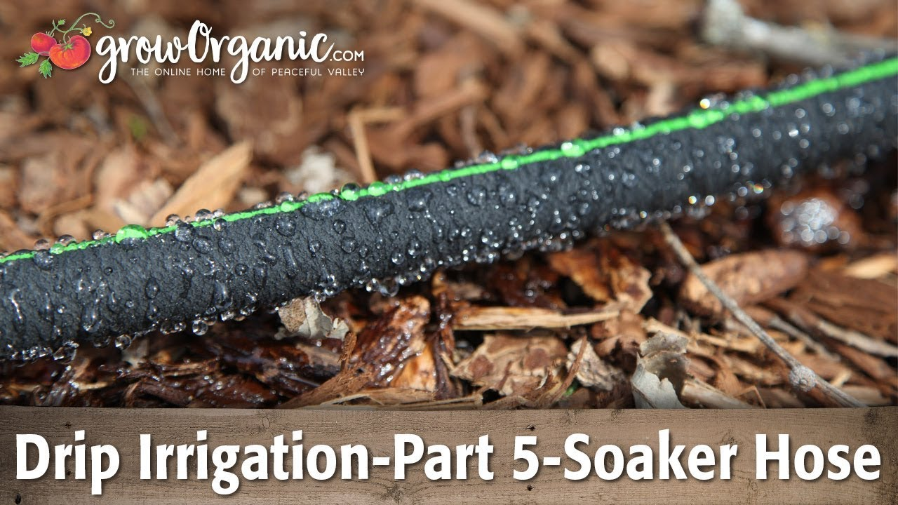 Drip Irrigation-Part 5-Using Soaker Hose in the Garden - YouTube
