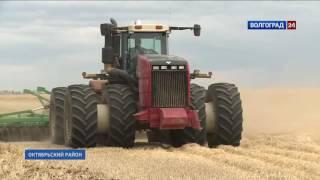 В Октябрьском районе убирают озимую пшеницу(Благодаря обильным осадкам весной растения на полях региона хорошо сформировались., 2016-07-04T11:48:35.000Z)