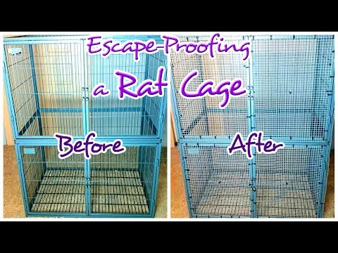 How to Escape-Proof a Rat Cage With Wide Bars | Hardware Cloth 101