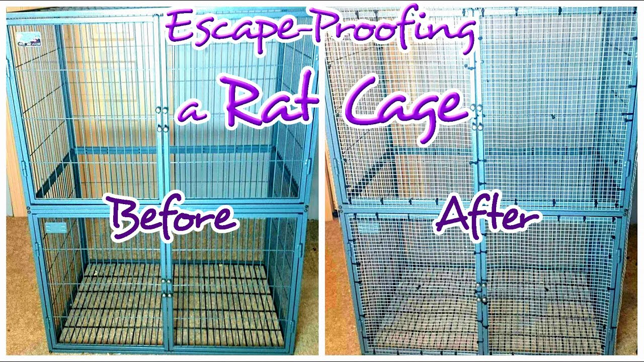 How to Escape-Proof a Rat Cage With Wide Bars | Hardware Cloth 101 ...