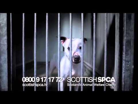 Scottish SPCA Christmas Donations Appeal