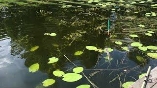 Летняя Рыбалка на Озере Отдых на воде Искупались и Покатались на лодке Наш Улов Рыбы