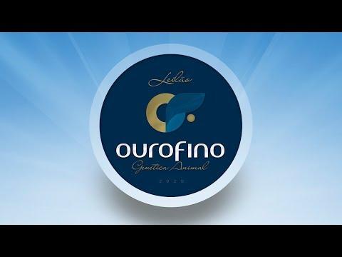 Lote 39   Palavra OuroFino   OURO 2667  Copy
