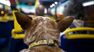 Как перевезти собаку через границу?(, 2018-01-18T12:04:52.000Z)