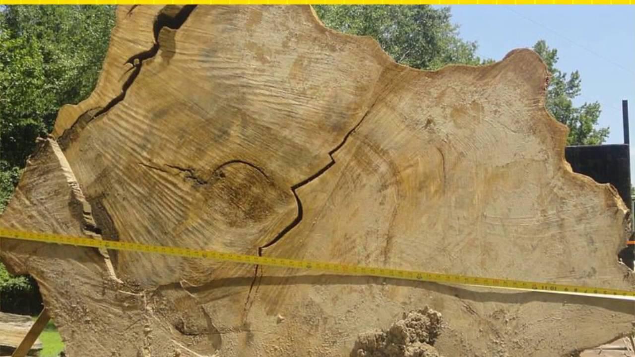 Sinker Cypress Wood For Sale Sinker Treasures