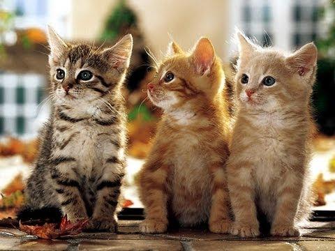 trois petits chats comptine pour enfants cover youtube. Black Bedroom Furniture Sets. Home Design Ideas