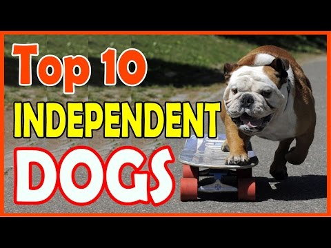 top 10 independent dog breeds
