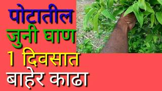 पोटातील जुनी घाण 1 दिवसात बाहेर काढा | Clean the stomach | ayurvedic gharaguti upay