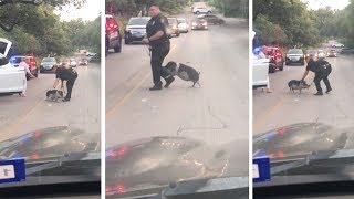 Pig Causes Traffic Jam Fighting With Officer