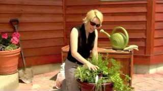 How to Plant a Potted Herb Garden