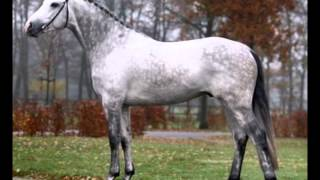 Nerd Herd: Horse Colors for Beginners