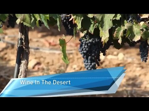 A Wine-Oasis in the Israeli Negev Desert