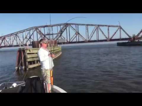 Anglers rake in redfish at South Louisiana hotspot