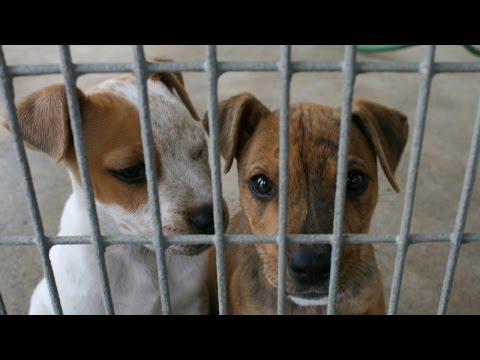 Animal Holocaust at PETA?