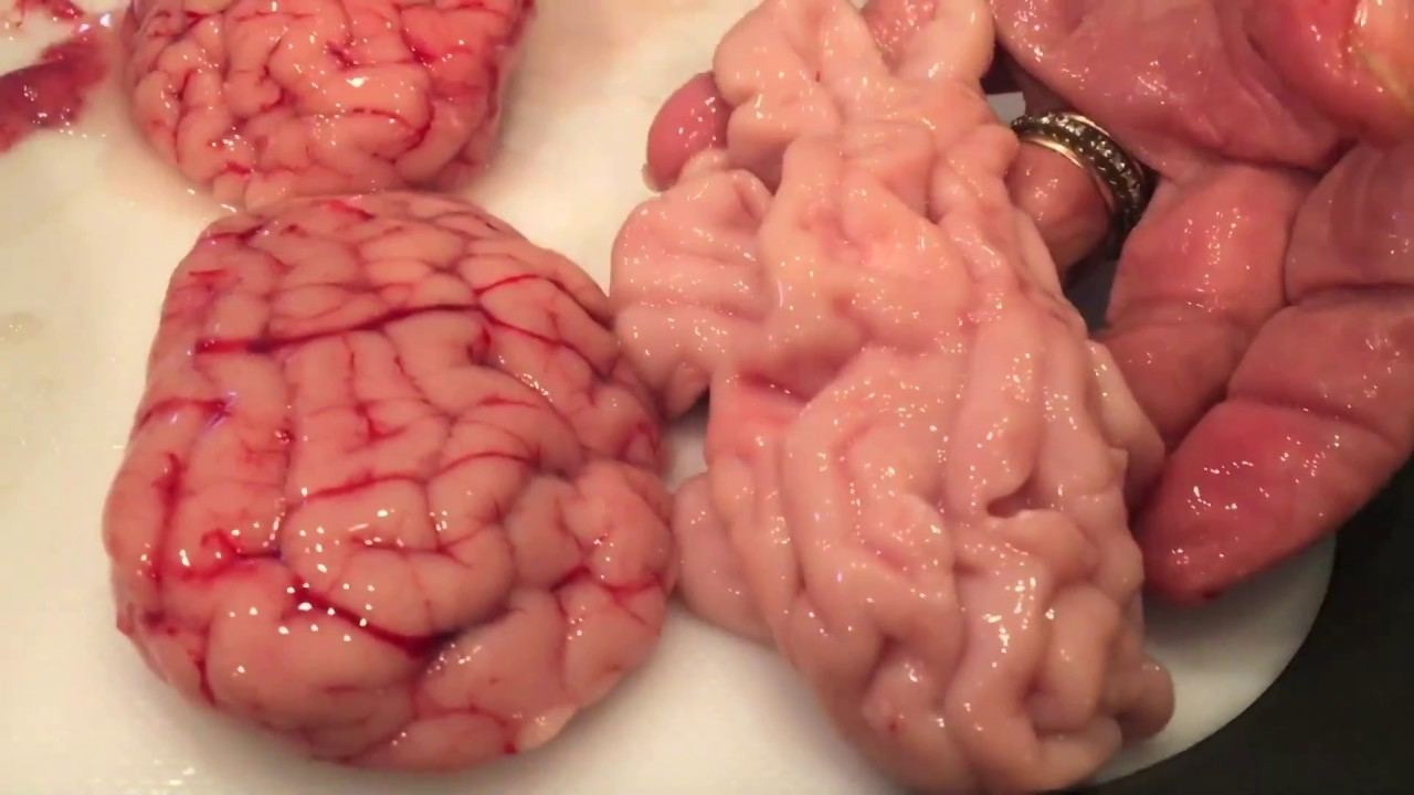 FOOD: 3 Time-Saving Recipes Of Making Cow Brain Stew... Obe Opolo!