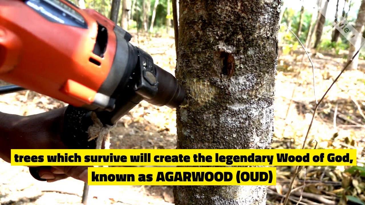 F A Q Frequent Asked Questions - Grandawood- Agarwood Australia