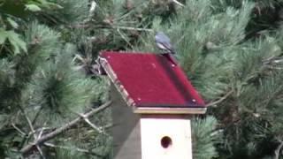 Bluebird House, Nesting Box, How To Mount Birdhouse