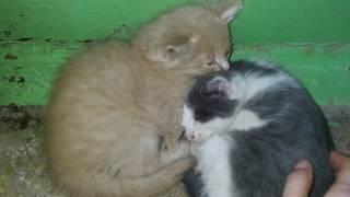 котята в добрые руки Уфа
