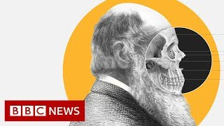 Theory of Evolution: How did Darwin come up with it? - BBC News