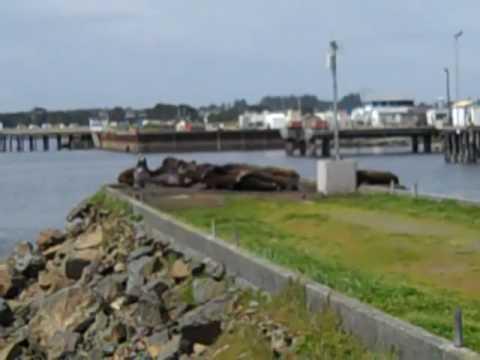 Crescent City Harbor (4.9)