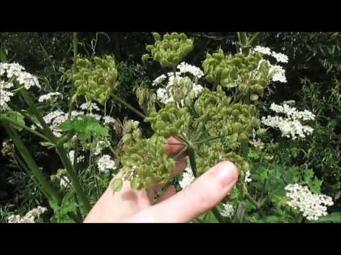 Summer herb walk