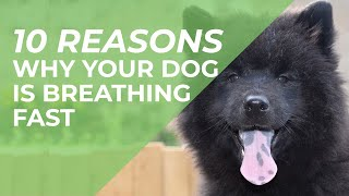 10 Reasons Why Your Dog Is Breathing Fast