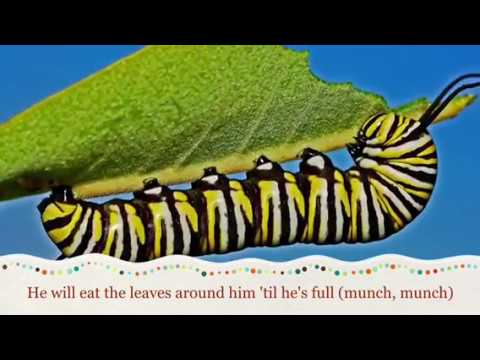 The Tiny Caterpillar Song, Songs For Early Years, Foundation Stage, Spring/Summer,