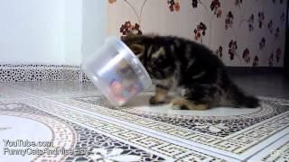 Новые смешные видео с кошками и маленькими котятами,ПРИКОЛ СМОТРЕТЬ!