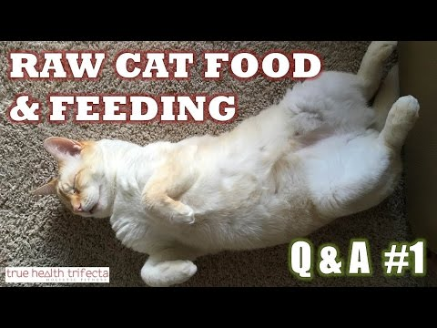 HOW TO MAKE RAW CAT FOOD - Q&A #1 - Feeding, Portions, Supplements, Can Kittens Eat Raw Meat?