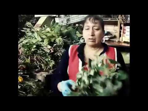 plantas-medicinales-azuay