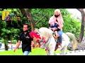 Kuda delman tanpa kereta ~ Pink Favorite horse ~ Kuda tunggang ~ Horse Stable ~