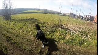 Walking the dogs GoPro hero 3+ silver to music 'Come with me now - KONGOS'