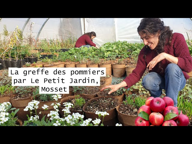 🍎 La greffe des pommiers par Le Petit Jardin, Mosset 🍎