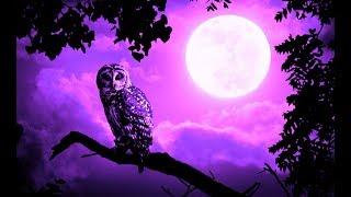 Good Night Music   Soft Calming Sleep Music   528Hz Healing Deep Sleeping Music   Peaceful Energy