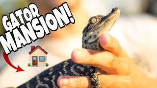 BABY Alligator gets EXTREME HOME MAKEOVER!!