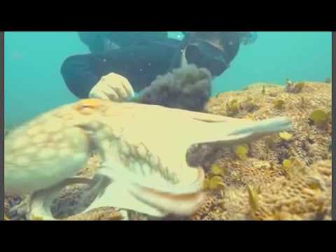 Diver gets more than he bargained for when octopus inks him