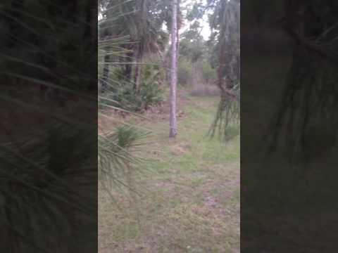 Hunting At JW Corbett WMA