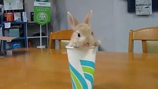 2 Rabbits 2 Cups コップにはいった子うさぎ 登場編