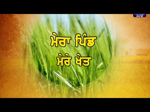 Mera Pind Mere Khet | 29 October 2019 | Latest Show | DD Punjabi