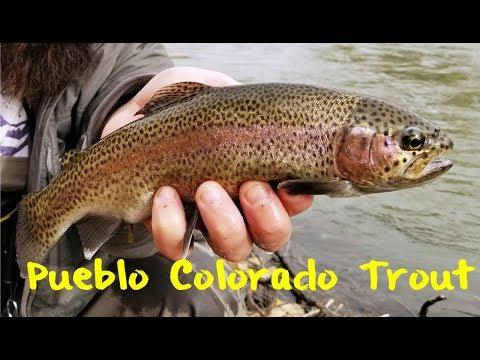 Trout Fishing Pueblo Colorado
