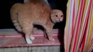 Разговор с котом #1