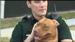 Orange County Sheriffs Office, Florida Pit Bull Rescue