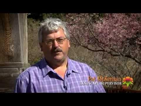 Over the Years Award | Botanica, The Wichita Gardens