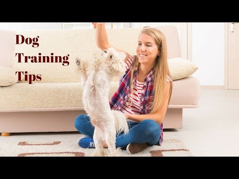 Dog Training Tips - 9 Top Tips On How To Train Your Dog